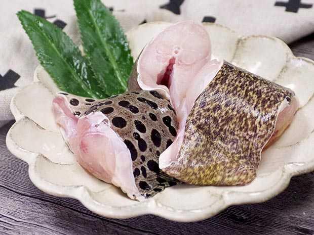 野生膠質錢鰻