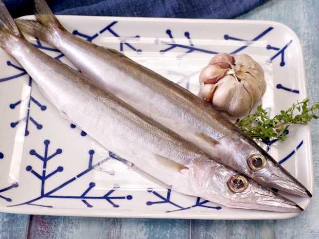 肥厚金梭魚