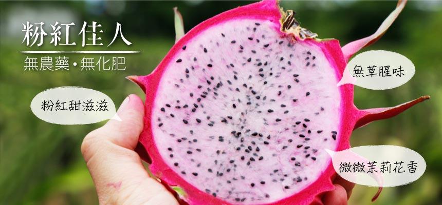 粉紅火龍果
