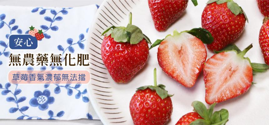 友善香水草莓